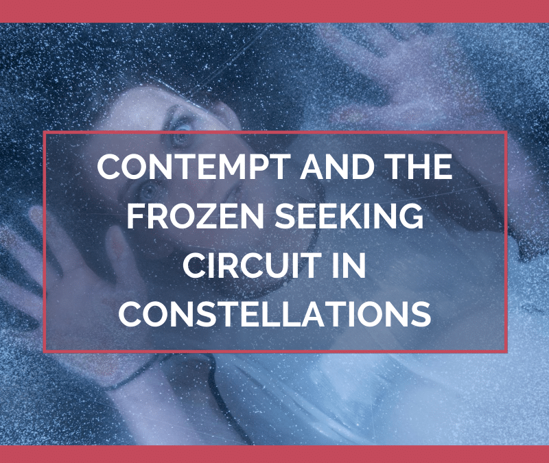 Contempt and the Frozen Seeking Circuit in Constellations