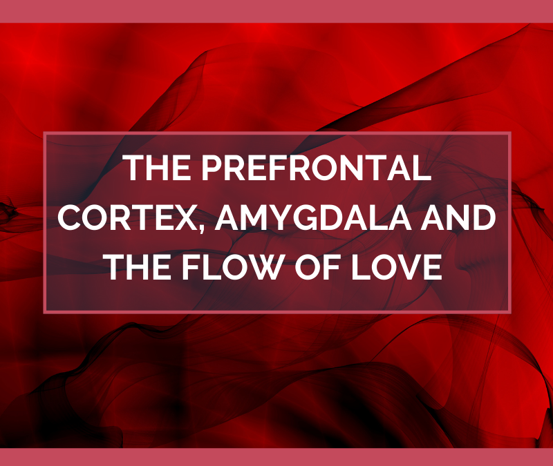 The Prefrontal Cortex, Amygdala and the Flow of Love – February 2021